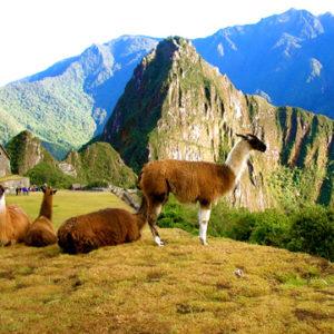 Visita Cusco y Machu Picchu 03 Días