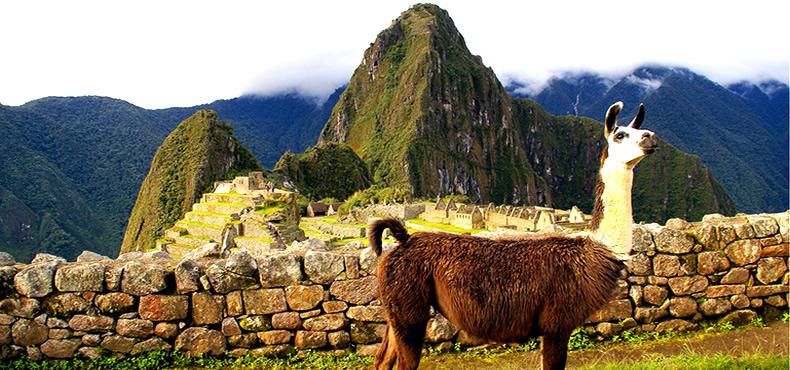 Tour Bus Machu Picchu + Huayna Picchu