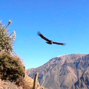 Tours al Cañon del Colca desde Arequipa 01 Dia