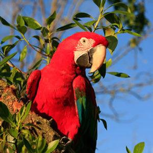 Tour Parque Nacional del Manu 05 Dias – Manu Expeditions Peru Tours
