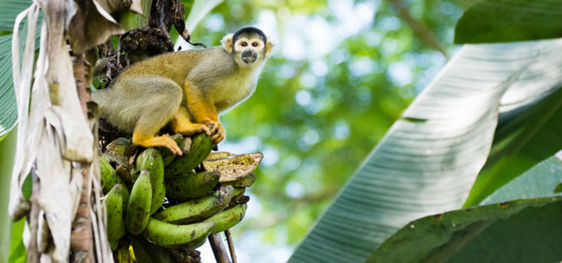 Tour Parque Nacional del Manu