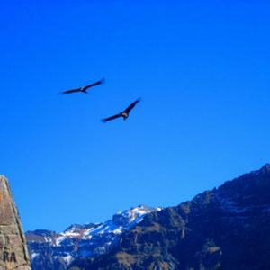 Tour Vuelo del Condor en Cusco 01 Dia (Limatambo) – Mirador del Condor Chonta Cusco