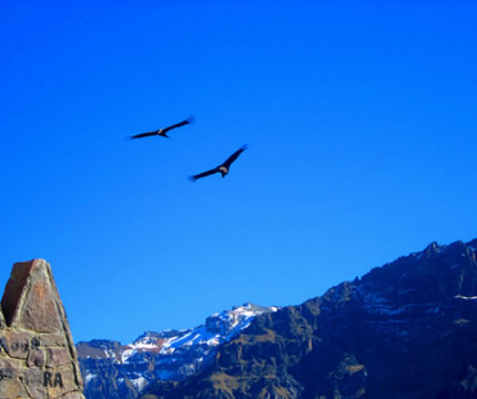 Tour Vuelo del Condor en Cusco