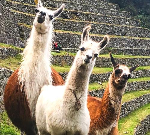 Tour Cusco, Machupicchu, Vinicunca, Maras Moray 05 Dias