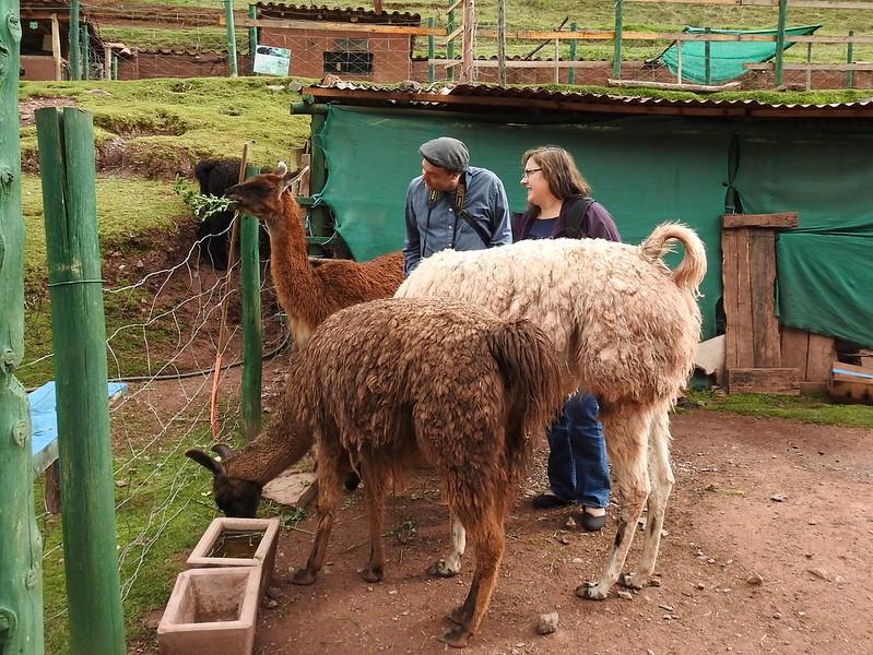Mirabus Cochahuasi Cusco, Bus Panorámico Cusco
